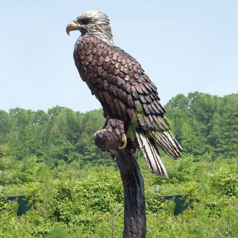 Looking at the eagle standing in the distance, can be customized